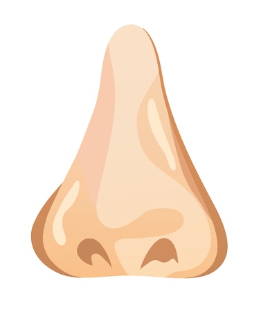 The illustration of a human nose. Vector illustration