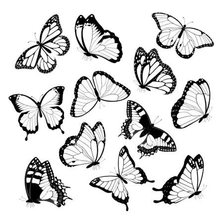 Illustration pour Black and white flying butterflies. Isolated on white background. Vector illustration. - image libre de droit