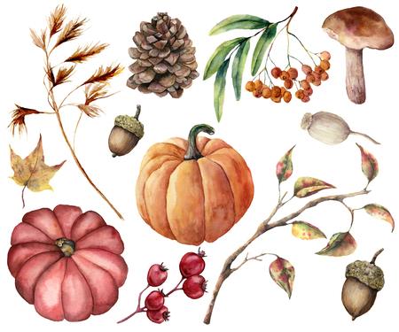 Foto de Watercolor autumn plants set. Hand painted pumpkins, leaves, mushroom, rowan, apple, cone, acorn isolated on white background. Floral illustration for design, print or background - Imagen libre de derechos