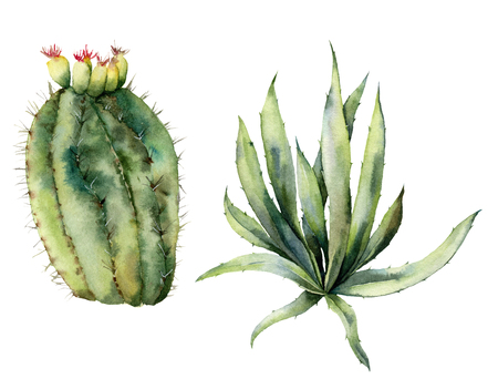 Photo pour Watercolor set with mexican cacti. Hand painted floral collection with desert cactus, agava. Botanical illustration isolated on white background for design, print, fabric or background. - image libre de droit