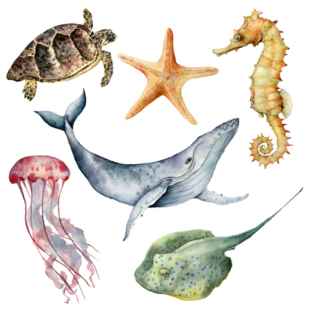 Watercolor underwater animals set. Hand painted whale, starfish, seahorse, stingray, jellyfish and turtle isolated on white background. Aquatic illustration for design, print or background.
