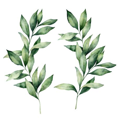 Photo pour Watercolor eucalyptus branches set. Hand painted eucalyptus thick branch and leaves isolated on white background. Floral illustration for design, print, fabric or background. Botanical set. - image libre de droit