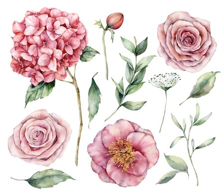 Photo pour Watercolor flowers set. Hand painted vintage flowers, pink roses, hydrangea and eucalyptus leaves isolated on a white background. Botanical illustration for design, printing, fabric or background. - image libre de droit