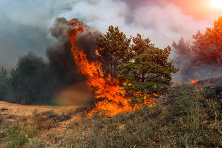 Foto de Forest fire. Burned trees after wildfire, pollution and a lot of smoke. - Imagen libre de derechos