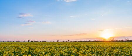 Photo pour field of yellow rape and a beautiful sunset background. - image libre de droit