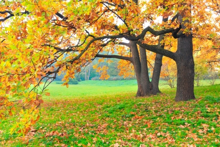 Foto de Autumn trees - Imagen libre de derechos