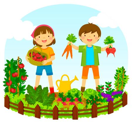 Ilustración de two kids picking vegetables in a vegetable garden - Imagen libre de derechos