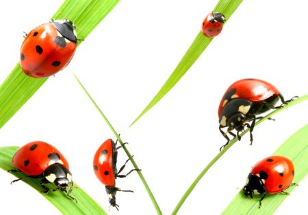 ladybug big family collect isolated on white