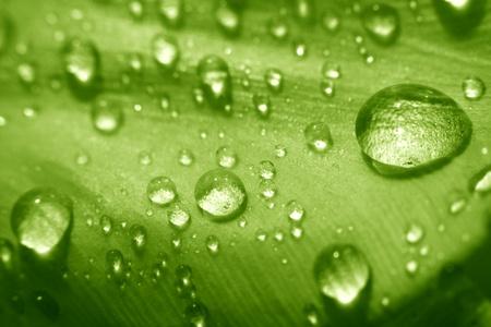 macro waterdrop on blossom green flower