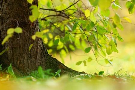Foto de close up autumn trees in park - Imagen libre de derechos