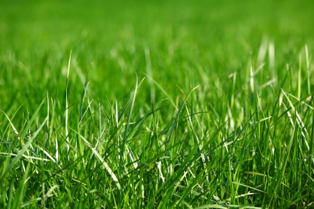 green grass macro close up