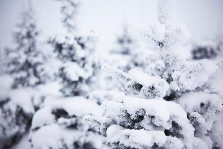 Photo pour winter trees on snow white background - image libre de droit