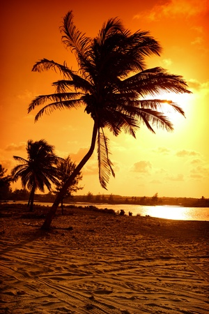 Photo for palm in yellow sunrise sky - Royalty Free Image