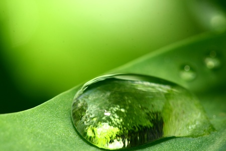 natural waterdrop on green leaf macro