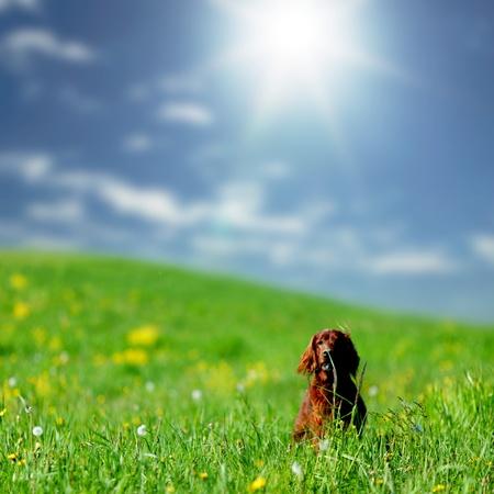 Photo pour dog on green grass field - image libre de droit