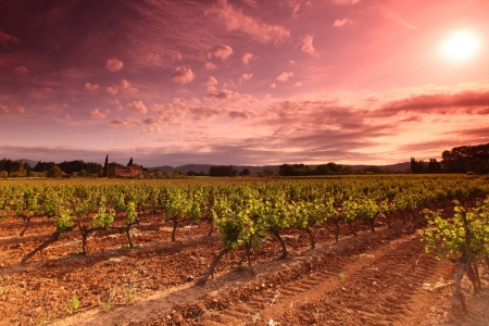 Amazing Vineyard Sunset in f