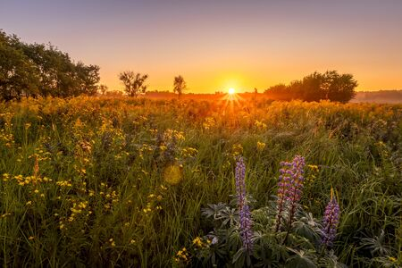 Photo pour Sunrise on a field covered with wild flowers in summer season with fog and trees on a background in morning. Landscape. - image libre de droit
