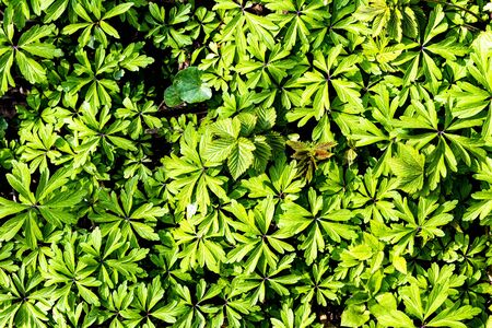 Photo pour Texture of young green plant sprouts. Early spring. Abstract backdrop for design. - image libre de droit