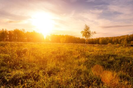 Photo pour Sunset on a field with grass, trees and dramatic cloudy sky background in golden autumn evening. Landscape. - image libre de droit