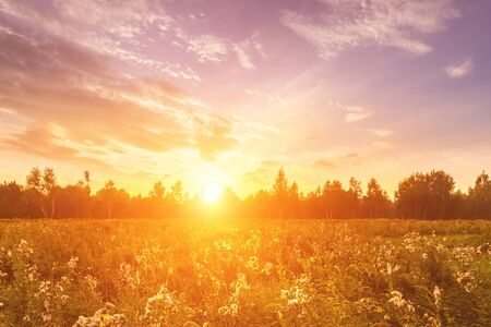 Photo pour Sunrise on a field covered with wild flowers in summer season with fog and trees with a cloudy sky background in morning. Landscape. - image libre de droit
