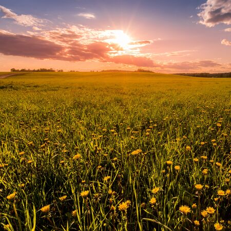 Photo for Sunrise or sunset on a field covered with young green grass and yellow flowering dandelions, a hill in the background and a cloudy sky with sunbeams cutting through the clouds. - Royalty Free Image