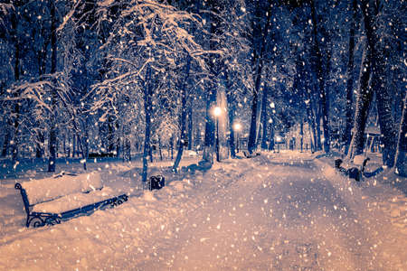 Photo pour Winter night park with lanterns, pavement and trees covered with snow in heavy snowfall. - image libre de droit