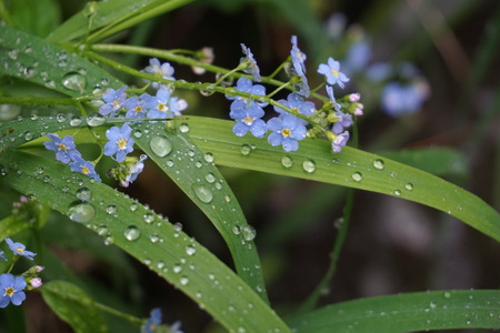 Flowers and green leaves in the rain