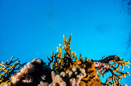 Photo pour Coral reefs and water plants in the Red Sea, Eilat Israel - image libre de droit