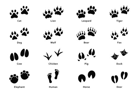 Photo for Animals footprints, paw prints. Set of different animals and birds footprints and traces. Cat, lion, tiger, bear, dog, cow, pig, chicken, elephant, horse etc. Vector - Royalty Free Image