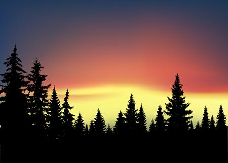 Illustration pour Silhouette of coniferous trees on the background of colorful sky. Aurora. - image libre de droit