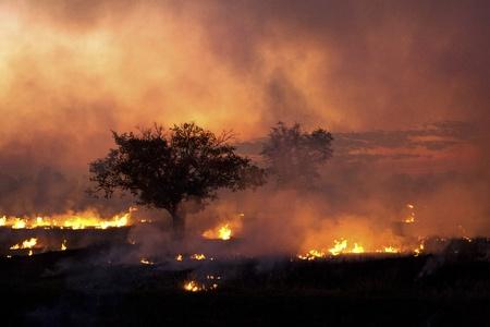 Fire burning rice farm