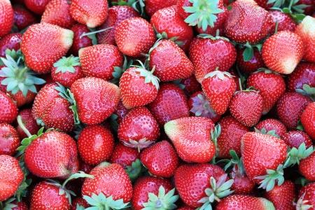 Harvest of ripe strawberries