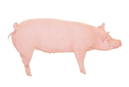 Big Pink Pig Cutout
