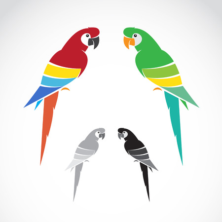 Vector image of a parrot on white background.のイラスト素材