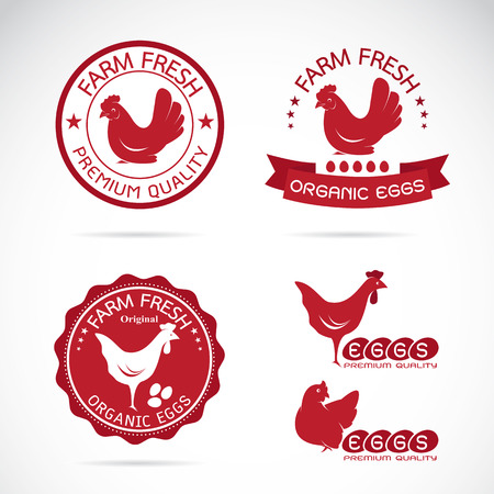 Set of vector an chicken and eggs label on white background
