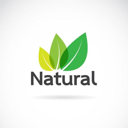 Ilustración de Natural logo design vector template on white background. Leaf icon - Imagen libre de derechos
