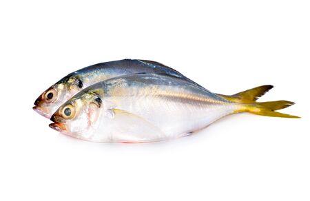 Photo pour whole round fresh horse mackerel on white background - image libre de droit