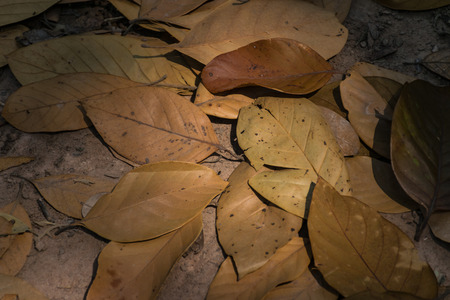 Drying leaves texture background, summer concept, dead of tree, brown color tone concept , natural background.