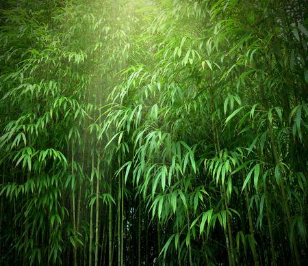 Photo pour Asian Bamboo forest with sunlight. - image libre de droit