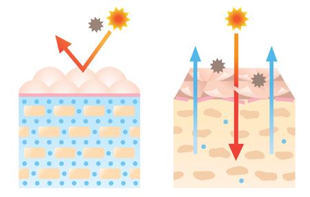Illustration pour healthy and dry skin diagram illustration. beauty and skin care concept - image libre de droit