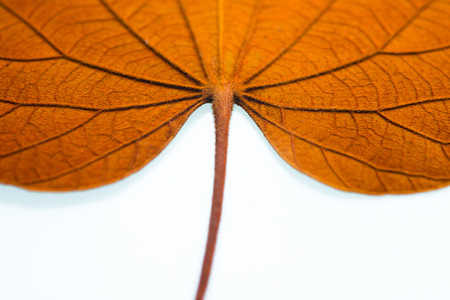 The inner surface of the leaves on a white background.