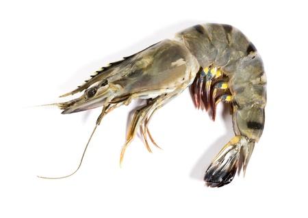 Photo pour Raw black tiger shrimp on white background - image libre de droit