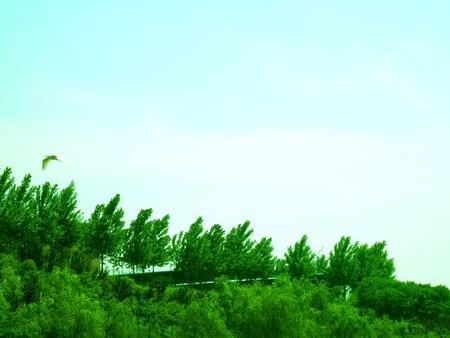 Youhubin120500161
