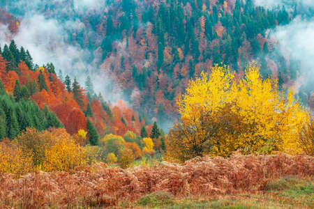 Photo pour View of majestic mountain forest. Gorgeous foggy hill with colorful coniferous trees. Concept of nature. - image libre de droit