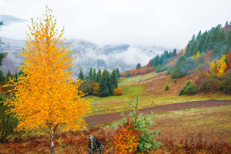Photo for View of majestic mountain forest. Gorgeous foggy hill with colorful coniferous trees. Concept of nature. - Royalty Free Image