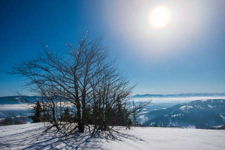 Photo pour Beautiful slender fir trees grow among snow-covered snowdrifts on a hillside against a background of blue sky and bright moon on a frosty winter night. Concept of resting outside the city in winter - image libre de droit