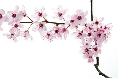 Spring Blooming Flowers in Studio
