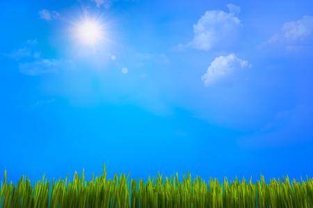 the sun illuminates the blades of grass. Spring decoration.