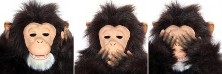 Gorilla Portraits present popular saying  See no evil, hear no evil, speak no evil