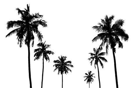 Illustration for tropical palm trees - Royalty Free Image